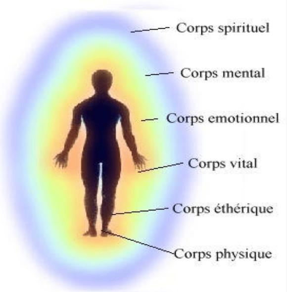 Emplacement énergétique des 7 corps (subtils et physique)
